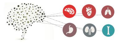 sistema-nervoso-autonomo